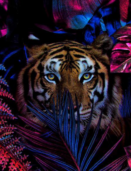 Картина по номерам 40x50 Тигр в красно-синих листьях